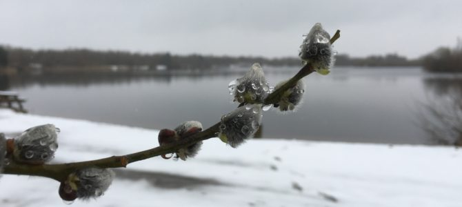 29-03-2018 – Mjøls Lystfiskeri – Isfri…..