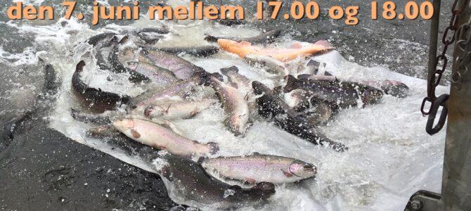 Mjøls: Friske fisk på fredag