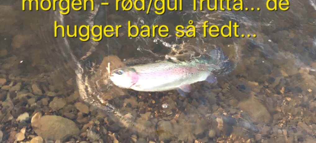 Mjøls Lystfiskeri: De hugger onsdag morgen i SØ1