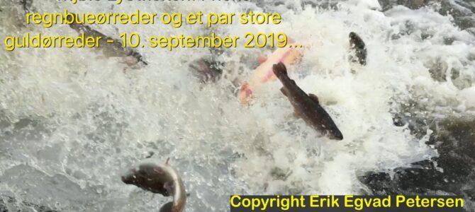 SE VIDEO – Mjøls Lystfiskeri: Friske regnbuer og et par store guldørreder