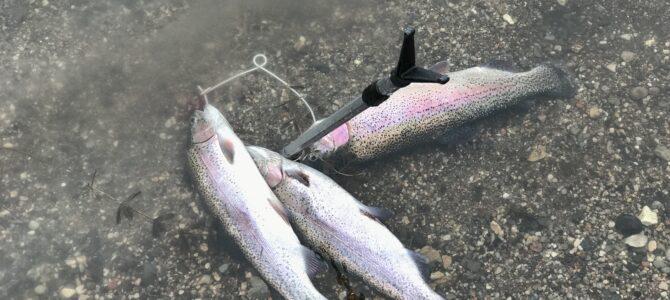 Mjøls Lystfiskeri – PowerBait