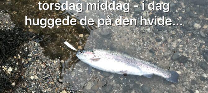 Mjøls Lystfiskeri SØ1 – Den tog den hvide Stripper