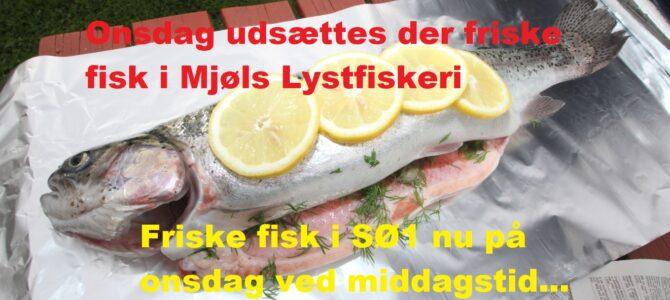 – Vi sætter friske fisk ud i Mjøls på onsdag….