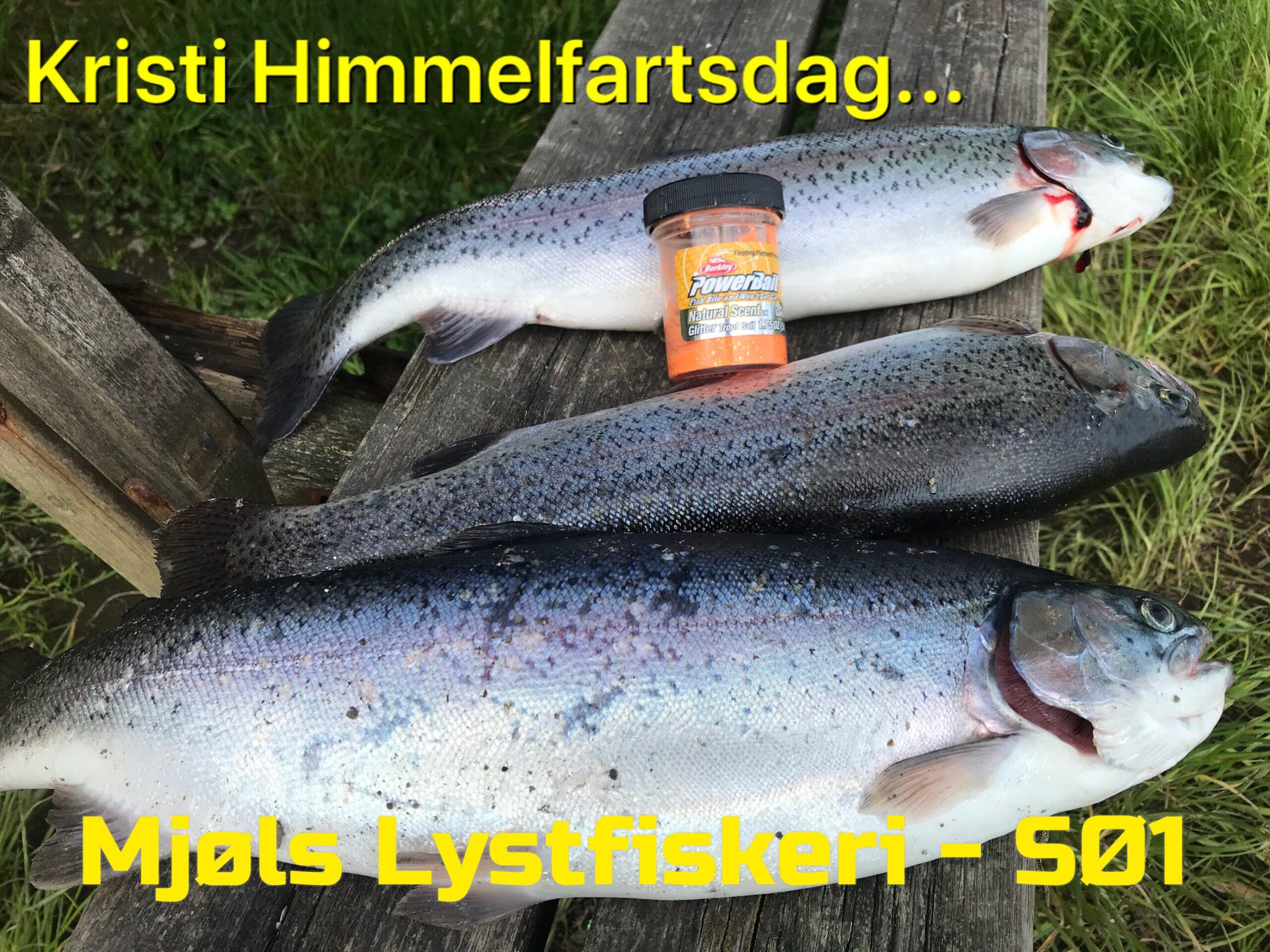 Ørrederne i Mjøls Lystfiskeri elsker hvidløg