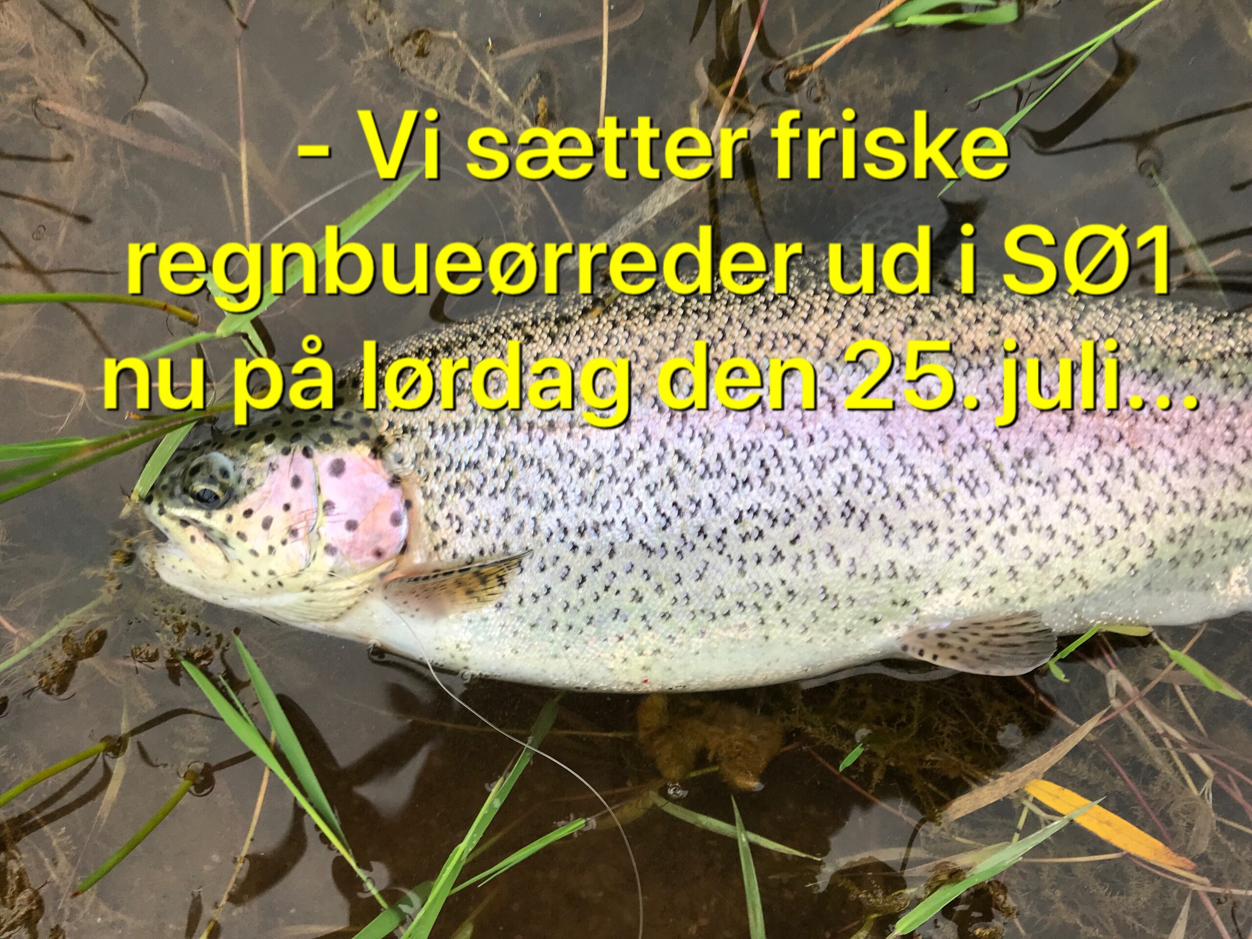 Mjøls Lystfiskeri: Nu på lørdag sættes der friske regnbuer ud i SØ1