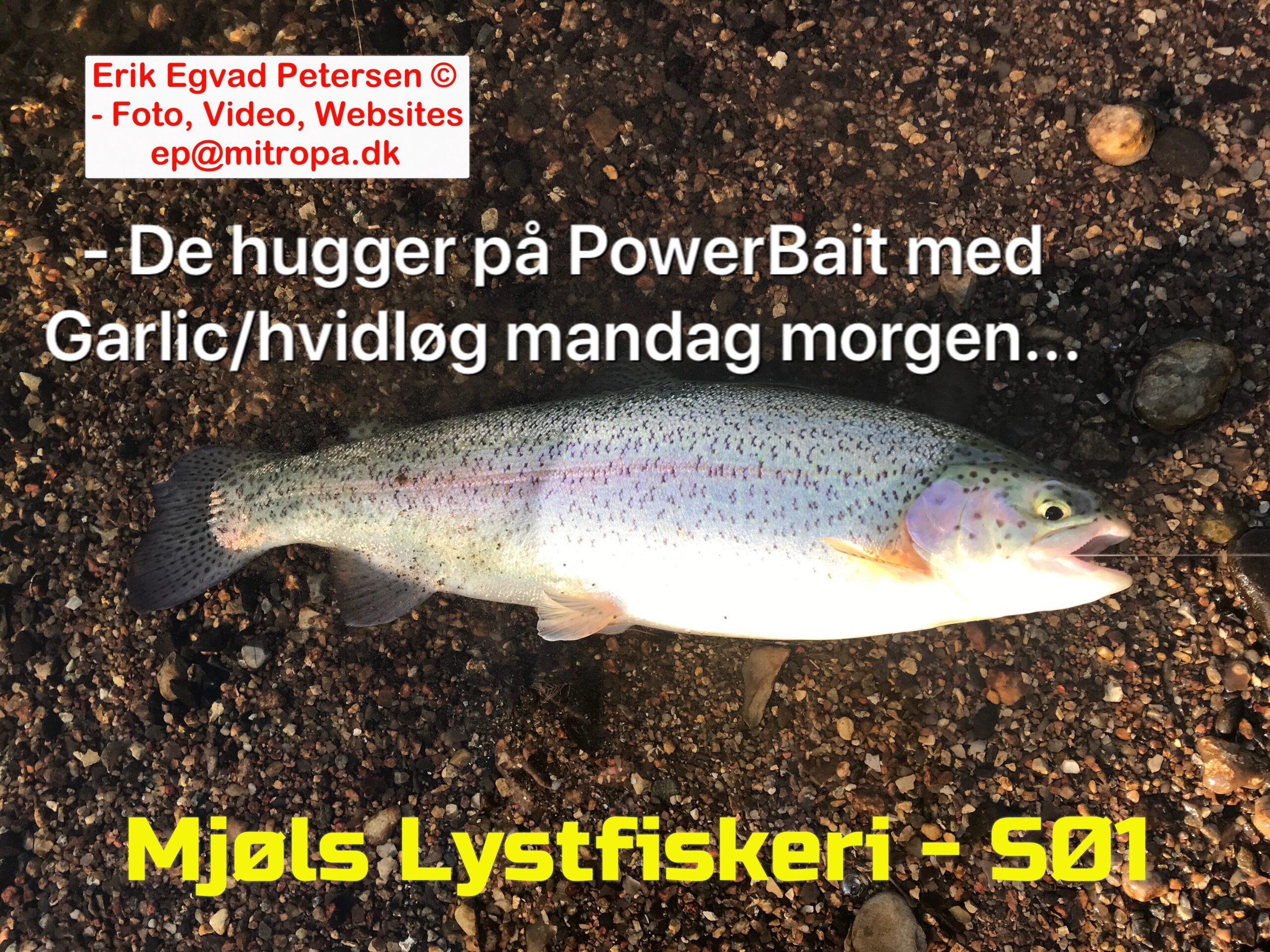SE VIDEO – Mjøls Lystfiskeri: De er vilde med Sunshine Yellow og Chartreuse