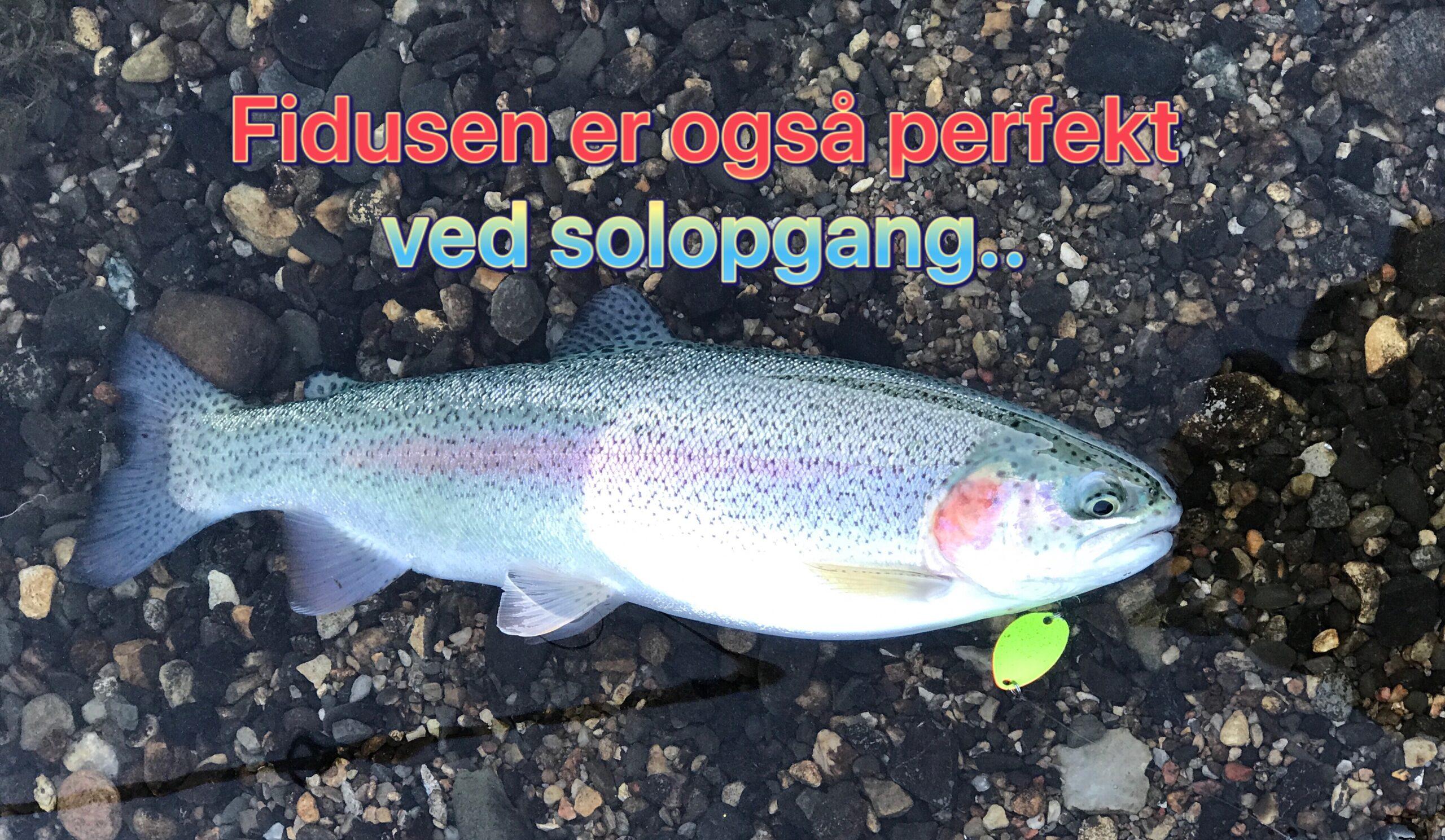 SE VIDEO – Mjøls Lystfiskeri – hug på Fidusen ved solopgang