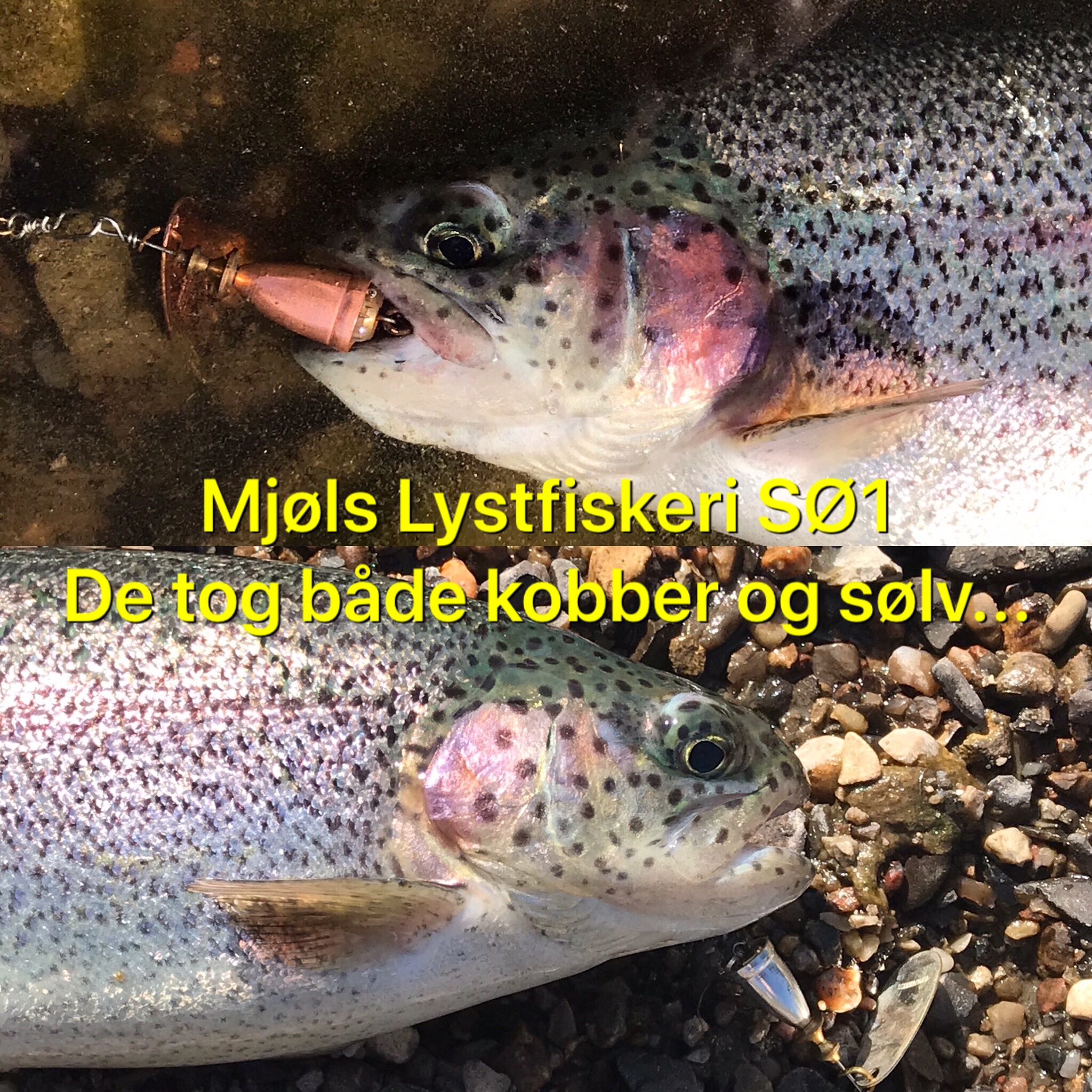 Mjøls Lystfiskeri SØ1 – De hugger også i solskinsvejr