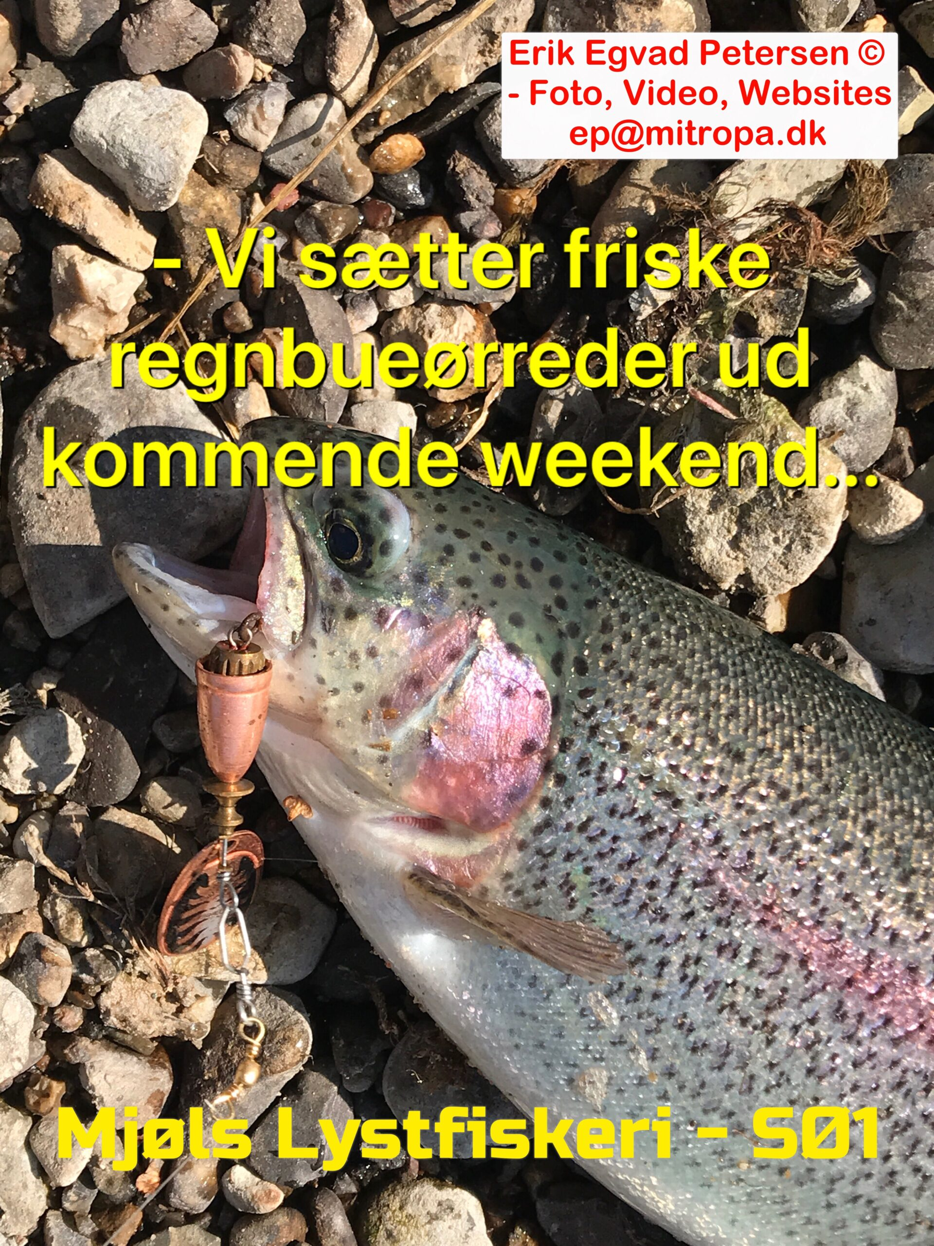 Mjøls Lysfiskeri – Vi sætter friske regnbueørreder ud