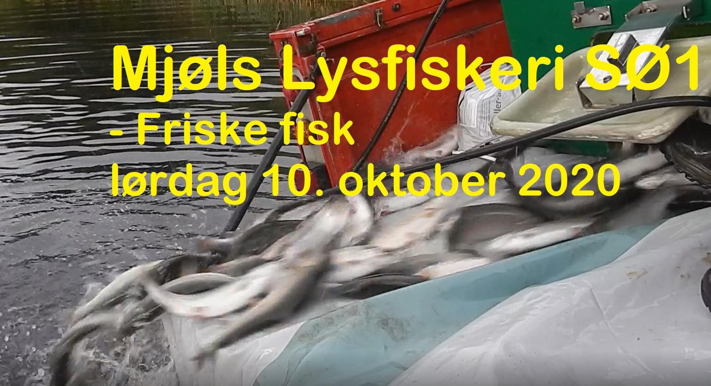 SE VIDEO – MJØLS LYSTFISKERI – Friske regnbueørreder i SØ1 her til formiddag