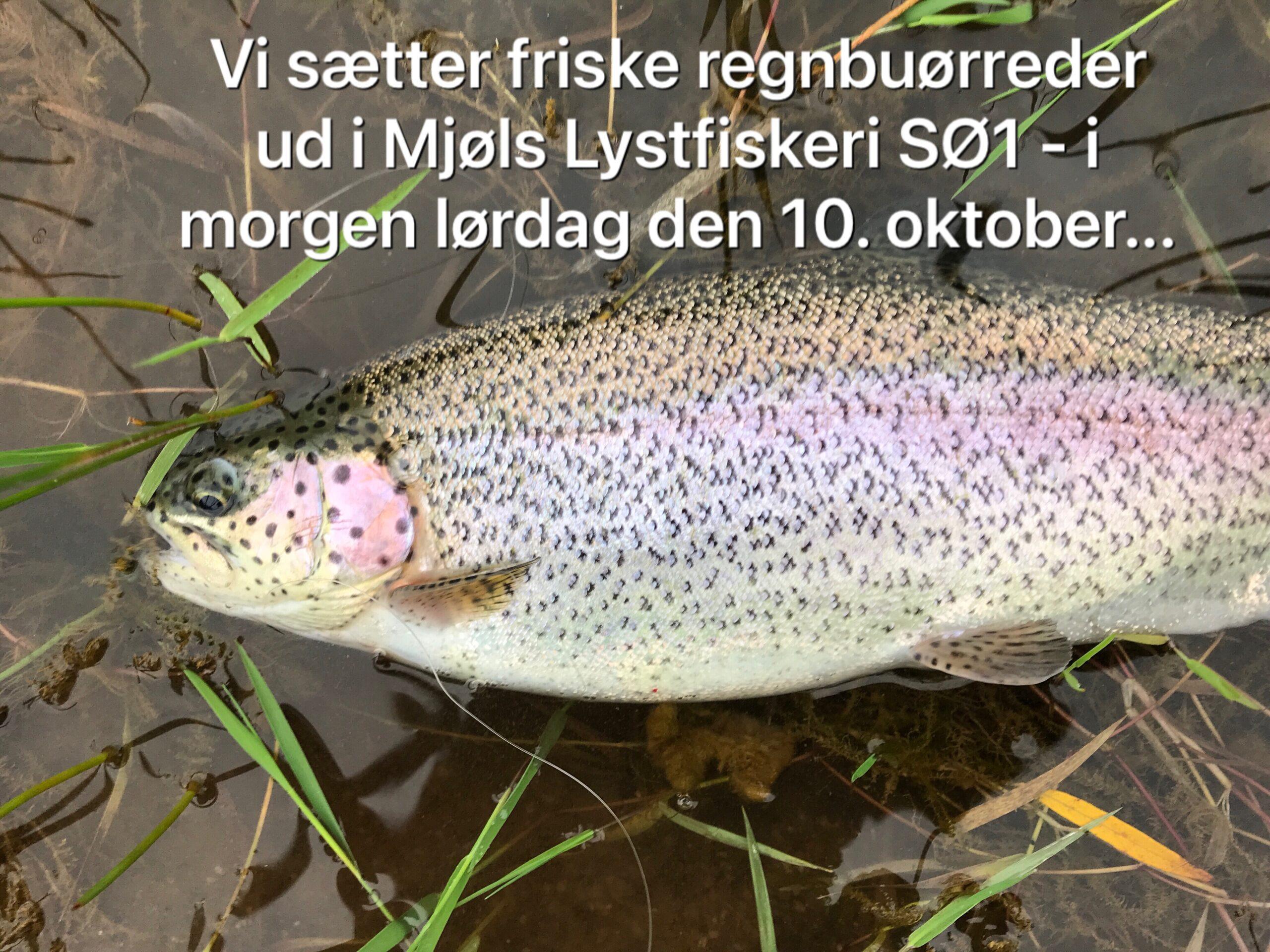 SØ1 – Friske fisk i morgen lørdag den 10. oktober