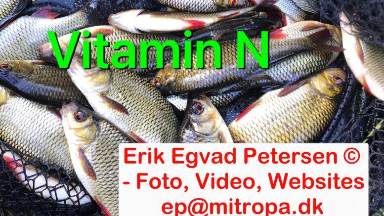 – Tag ud og fisk og få vitamin N