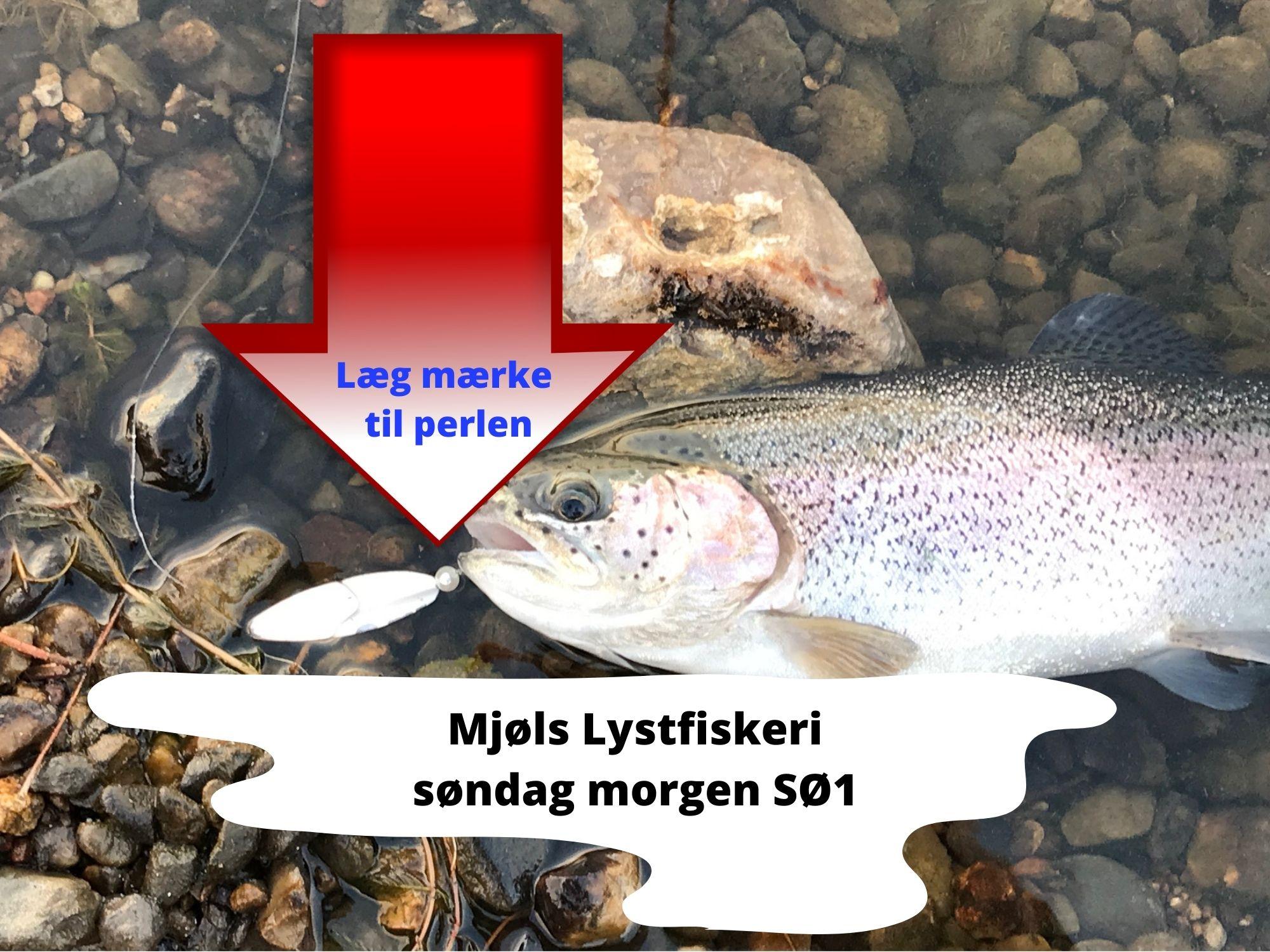 Mjøls Lystfiskeri: De bliver ved med at hugge på Trutta – det gav våde fødder her til morgen